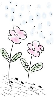 flowers y lluvia